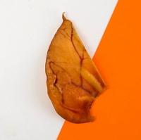 Homemade Full Pig Ear Dried Dog Treats