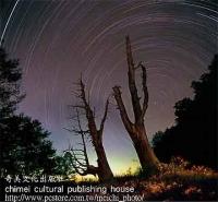 [TAITRA] No.867 Couple Tree Star Beauty Postcard