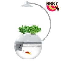 [TAITRA] ARKY, vanilla and fish, herbs and fish