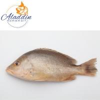 Ikan Merah Bersih 800g-1000g