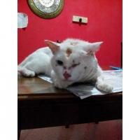 AzfaRich Ubat Kucing - Booster Kucing 200ml (Trial Pack)