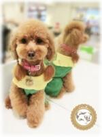 (Chérie)Ch?rie super cute sweater pocket styling