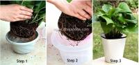 SHS Kebun Self-watering Pot Hydroponic Pot (HT11)