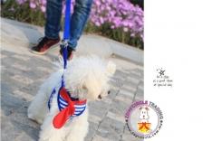 Stylist Pet Leash Harness